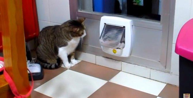 ここを通るには兄猫様の許可が必要なのです!