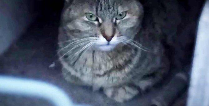 危険な外の世界で大怪我を負った猫…たどり着いた未来とは?