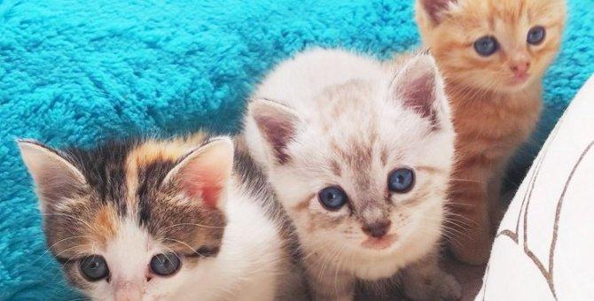 親猫のいない離乳前の子猫4匹をレスキュー。生命力に胸を打たれる