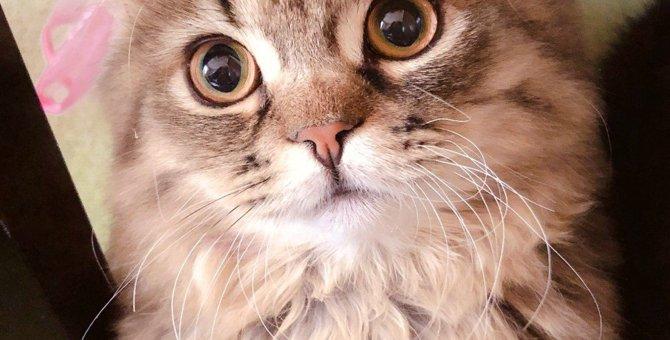 いくつ当てはまる?猫と飼い主の3つの親密度チェック項目