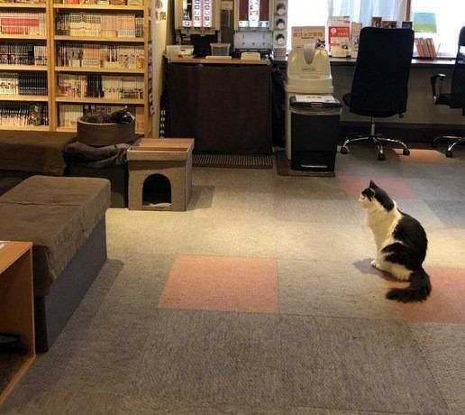 猫カフェ「猫の居る休憩所 299ニクキュウ」に行ってきました!