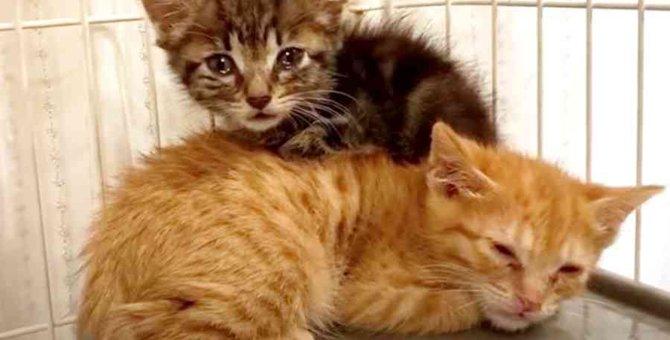 猫風邪で命の危機に瀕した子猫たち…救出後の可愛い姿に感動!