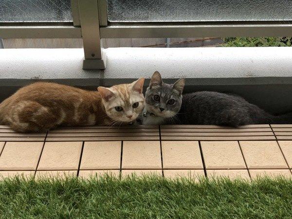 模様が違うのに兄弟?!猫の色や柄が決まる不思議を解説!