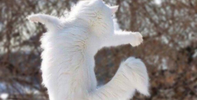 猫にとって最高の生き方とは?大切な4つの事