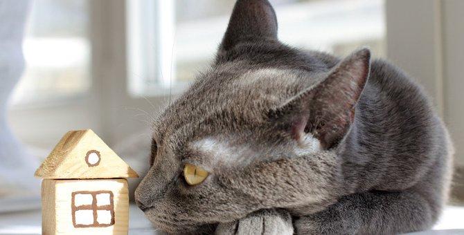 猫に『帰巣本能』はあるの?実際にあったエピソード