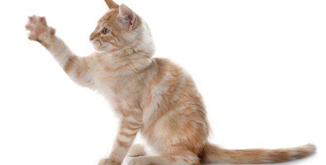 猫の足についてどれくらい知っていますか?