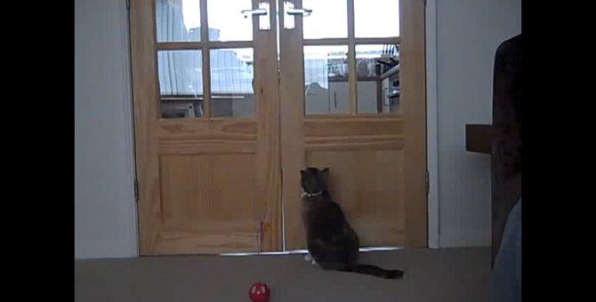 腕力すごい!驚きの方法でドアを開ける猫ちゃん