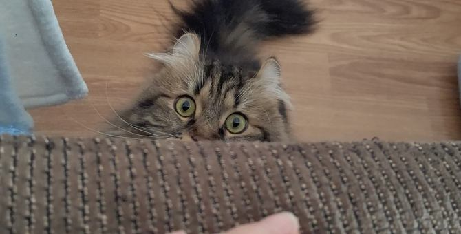猫と初対面で仲良くなれるの?距離を縮めるために試したい5つのこと