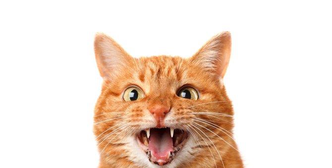 猫が『鳴き止まない』ときの原因4つと対処法