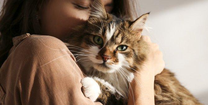 愛猫についついやっちゃう『猫吸い』実はストレス?