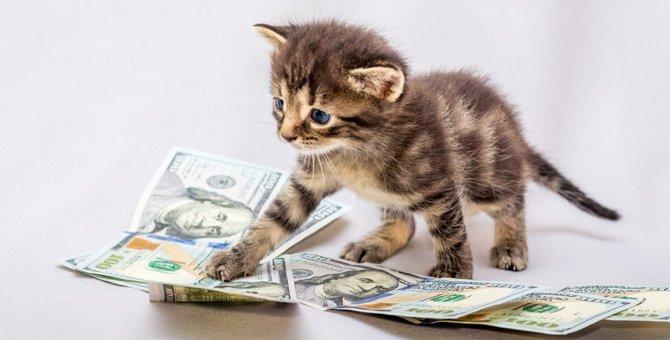 猫の『生涯にかかるコスト』とは?飼うために必要な時間や費用を徹底解説!