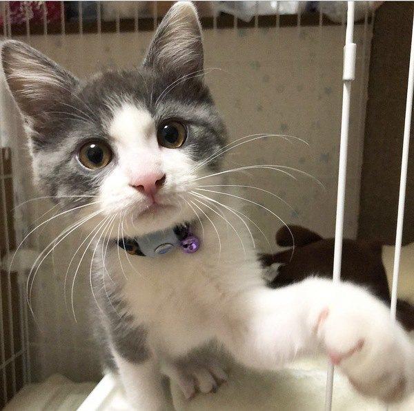 『甘えん坊な猫』との正しい距離感とは?近すぎても悪影響!