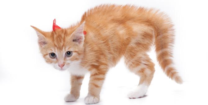 猫のしっぽが膨らむ時の気持ち~怒りだけじゃない意外な理由~