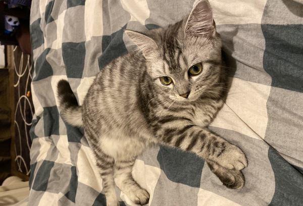 猫に我慢させない飼い主になるための工夫3つ