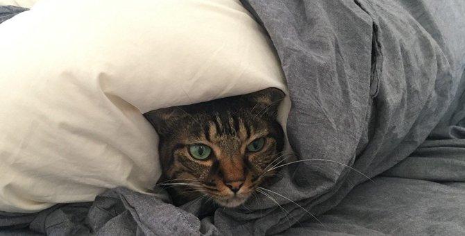 猫が落ち着ける隠れ家を作ってあげよう♪