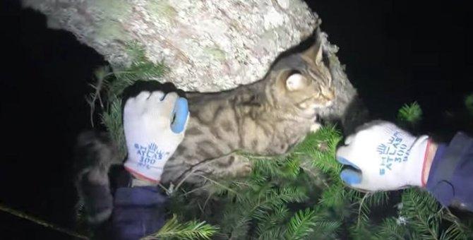 極寒の季節に行方不明になった猫…意外な場所からレスキュー!