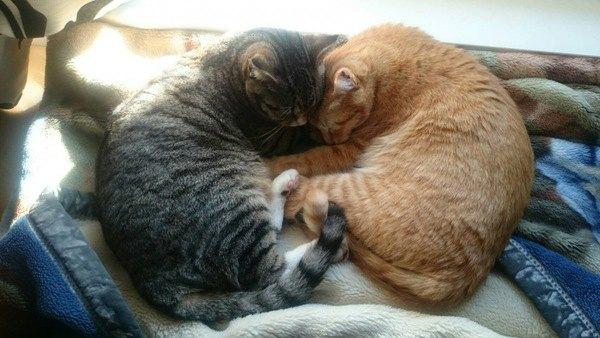 猫が尻尾を絡ませてくるときの4つの意味