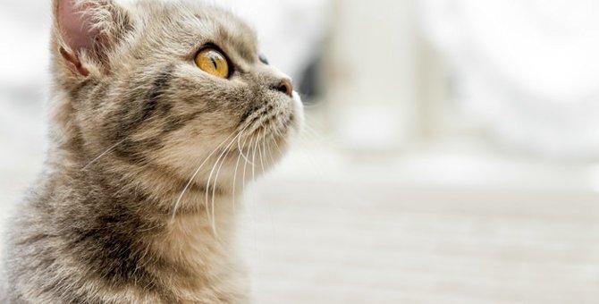 猫が吐血した時に考えられる病気と原因