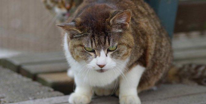 猫が凶暴な性格になってしまう原因とリスク