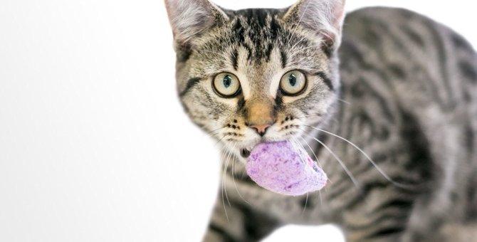 猫の飼い主を悩ませる『異食症』とは?その原因6つと対処法
