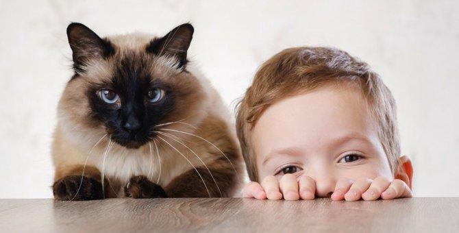 猫が人間にとって『必要不可欠な存在』である4つのワケ