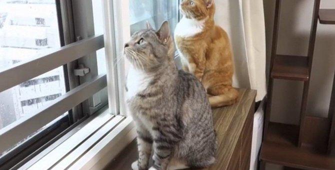 突然の豪雨!いつもと違う空模様に猫ちゃんたちは…?