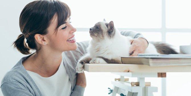 猫の表情にあらわれている感情や気持ち
