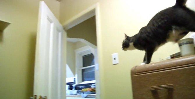 脳内でシミュレーションしてからおもちゃを取りに行く頭脳明晰な猫ちゃん