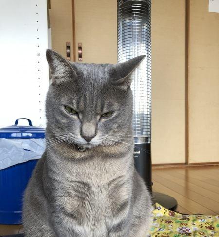 怒っている猫にしてはいけないNG行為5つ