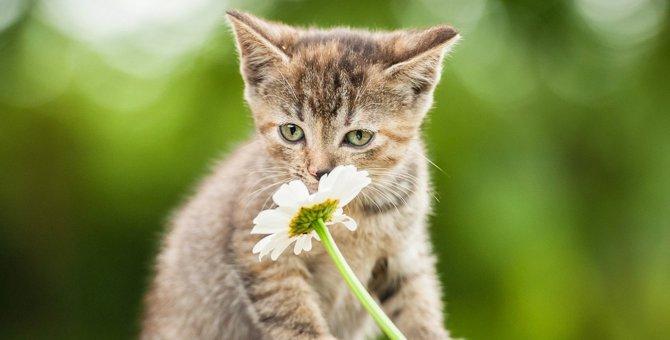 猫が『大嫌いな匂い』5選!しつけなどの活用方法とは?
