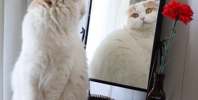 猫の『ダイエット』で絶対してはいけない危険行為4選