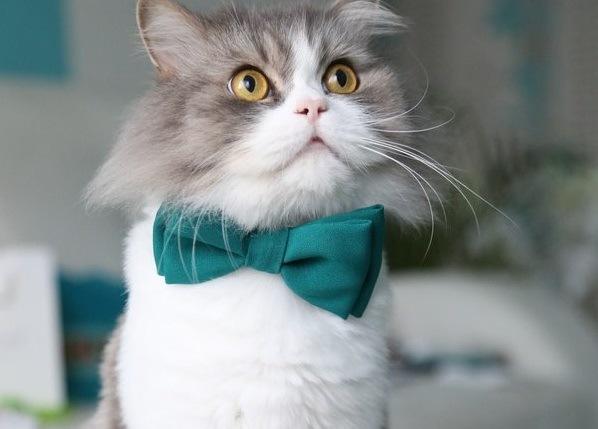 愛猫の写真を応募してみよう!いろんなフォトコンテストをご紹介
