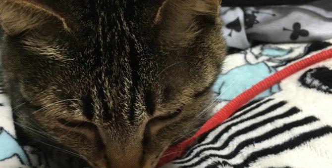 おやつ感覚で簡単!猫の毛玉吐き対策で本当におすすめ「スッキリン」