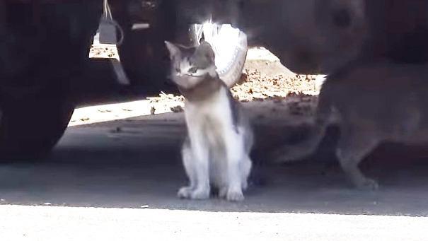 割れたガラス瓶が首から抜けない子猫を助けて!危険な救助の一部始終