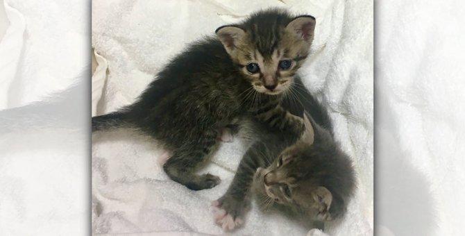 子猫2匹を保護したら1匹の100倍大変だった!その理由とは?