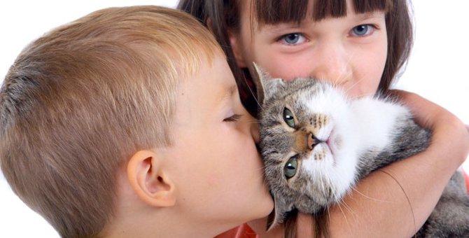 猫は飼い主の気持ちに寄り添うことができるのか?