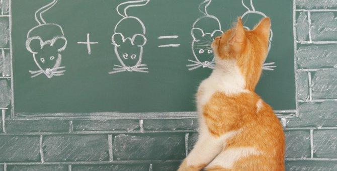 猫の記憶力はどのぐらい?兄弟や嫌な事は覚えているのか
