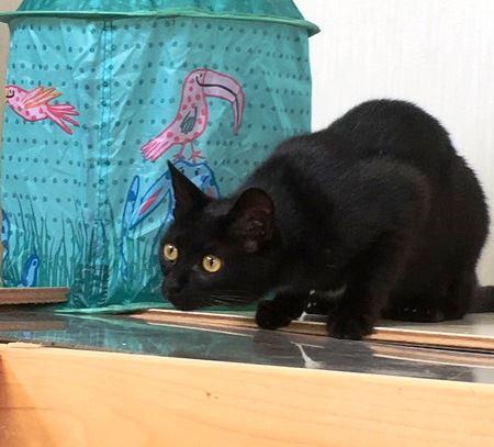 【あるある】猫の急なハイテンション「〇〇ハイ」4選
