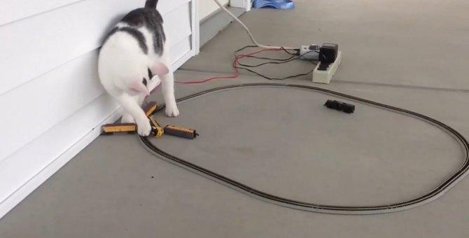 電車を脱線させる使命を背負った猫ちゃん