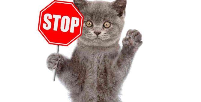 猫の早死に繋がる『危険なフルーツ』4選