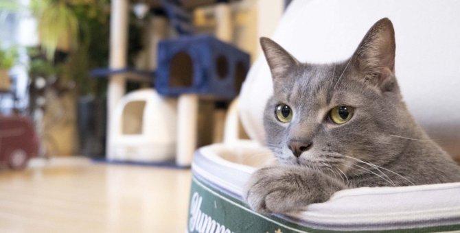 猫が『カバンの上』で寝たがる理由3つ