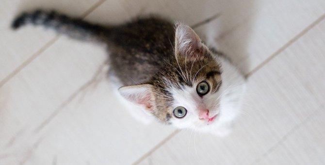 猫はどうして天井を見つめるの?2つの理由といくつかの仮説