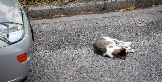 交通事故に遭った猫を発見したときに必ずするべき5つのこと