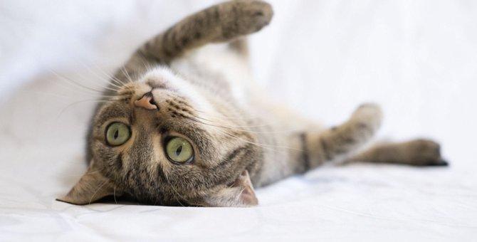 猫が飼い主と『一緒に遊びたい』ときにする仕草3つ