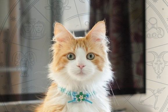 Laylaの12猫占い 9/30~10/6までのあなたと猫ちゃんの運勢