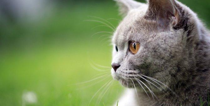 猫の視力ってどのくらい?色は見えているの?