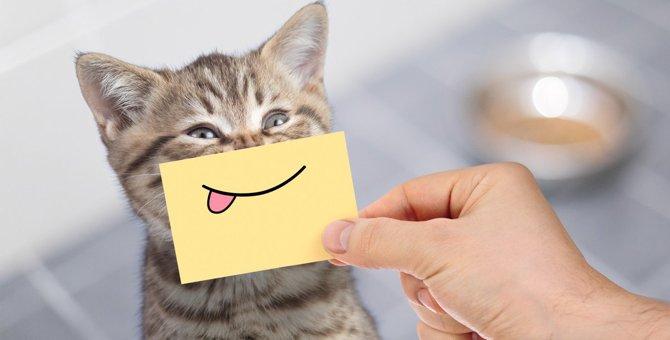 猫の『喜怒哀楽』がわかるチェック項目3つ