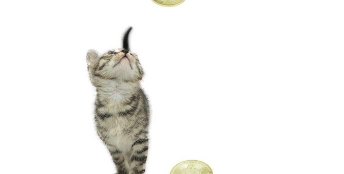 仮想通貨で困っている猫達を救う?!コネコ募金とは?