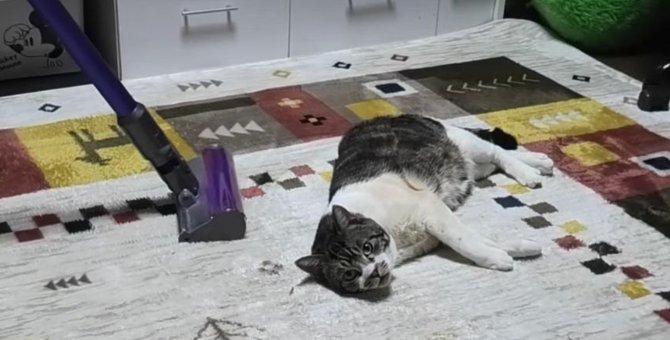 全然動じない!掃除機ヘッチャラ猫ちゃん