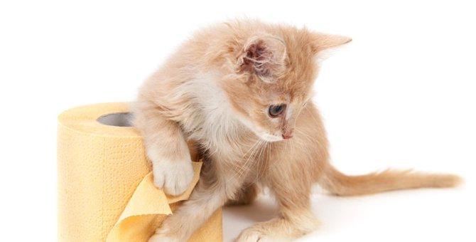 猫が便秘になる原因と解消に繋がる4つの方法